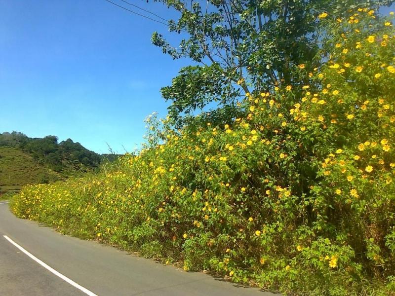 8. Đồi hoa dã quỳ- Đà Lạt