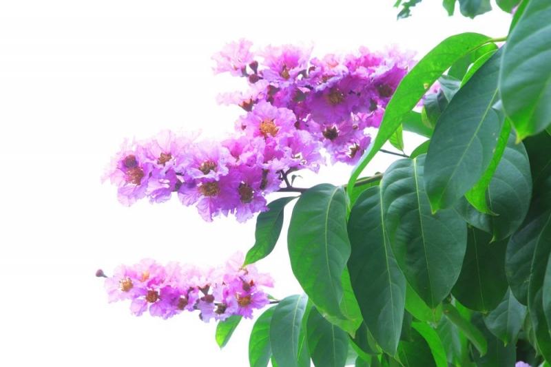 Loài hoa mang nhiều ý nghĩa