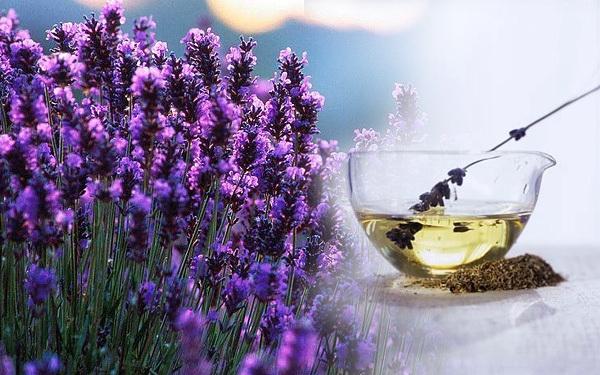 Tinh dầu oải hương giúp trị bỏng/phỏng nhẹ