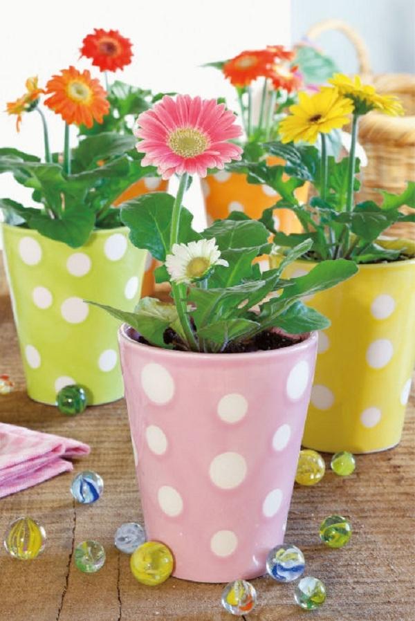 Cúc đồng tiền có thể trồng thành hàng ngoài ban công hoặc trồng trong các chậu nhỏ