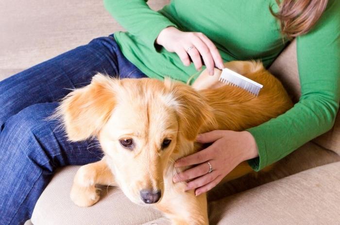 Theo các nhà nghiên cứu khoa học của Mỹ đã chứng minh rằng thú cưng thật sự rất tốt cho việc chữa trị các chứng bệnh về thần kinh và stress.
