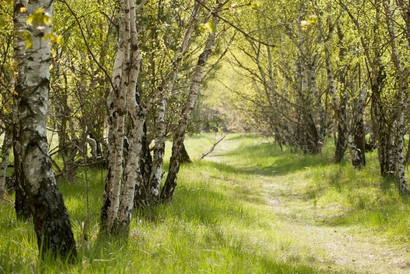 Tán cây xanh rợp bóng trên lối mòn