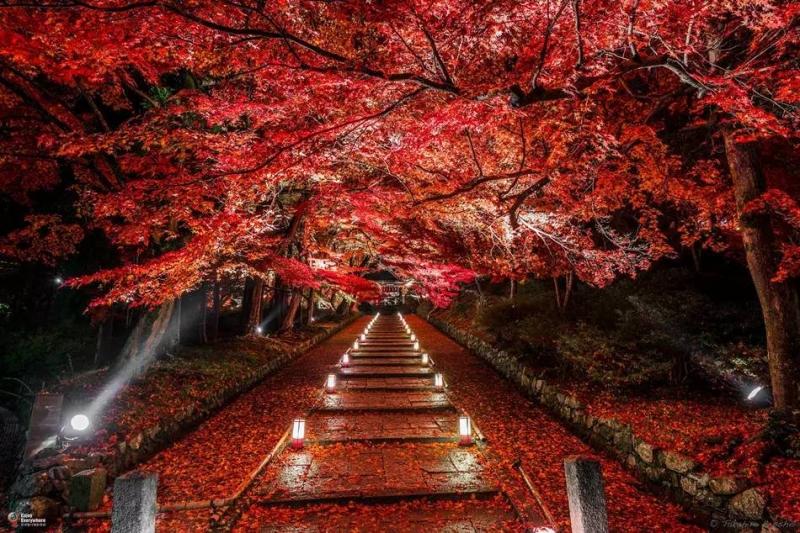 Ánh đèn buổi tối làm con đường càng trở nên lung linh