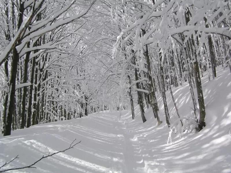 Hai tán cây phủ đầy tuyết trắng xóa