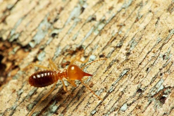 Công ty Đại Việt có thâm niên hơn 10 năm trong lĩnh vực phòng chống côn trùng tận gốc tại khu vực Đồng Nai.