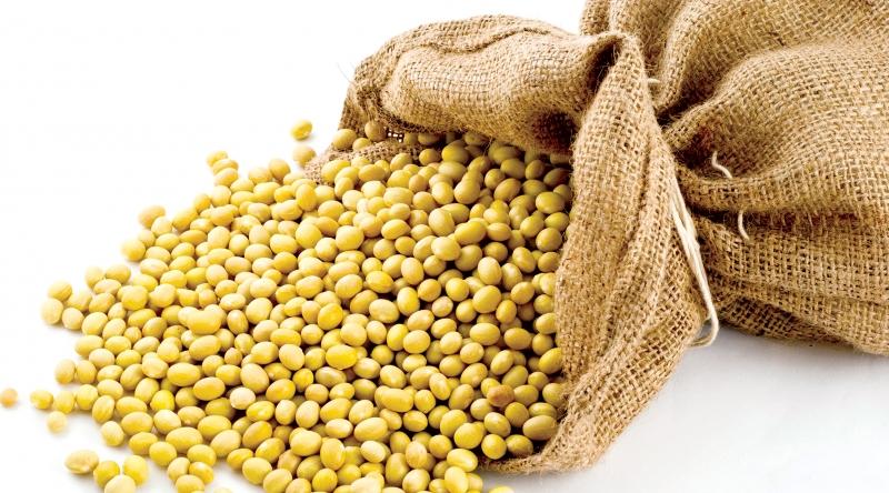 Khi mang thai, để giảm thiểu nguy cơ bị táo bón và trĩ, các mẹ bầu có thể nhờ đến sự hỗ trợ thần kỳ của các loại đậu.