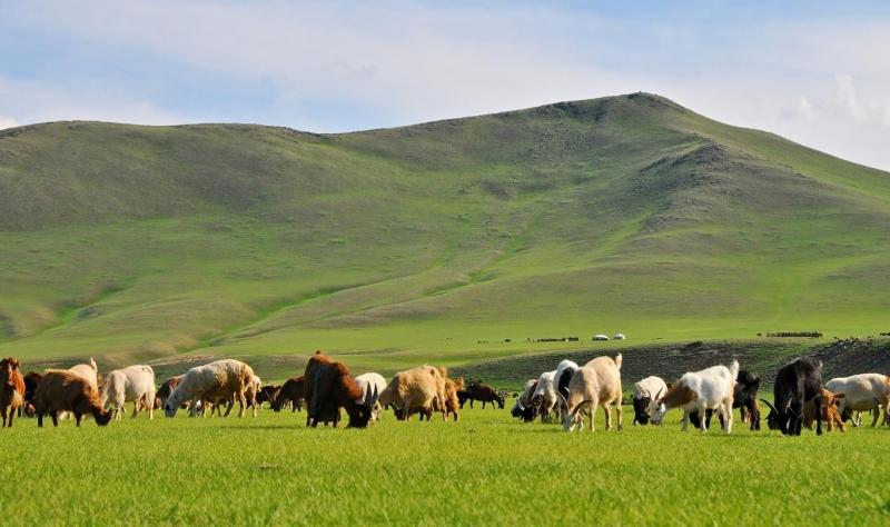 Thảo nguyên Kharkhorin  Mông Cổ