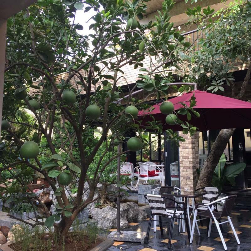 Cafe Sạch-Cafe Sân Vườn S100