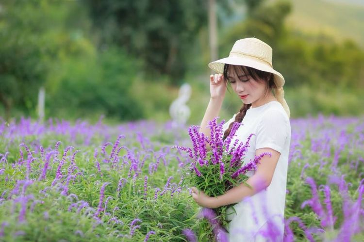 Cánh đồng hoa Lavender thung lũng tình yêu