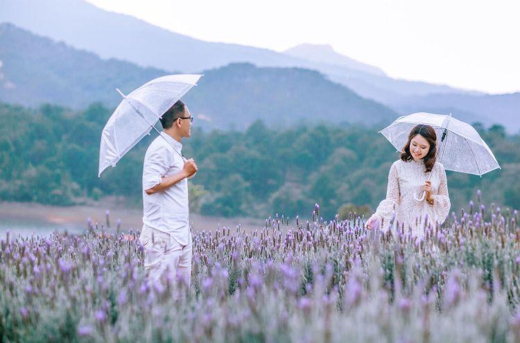 Cánh đồng hoa Lavender Tuyền Lâm