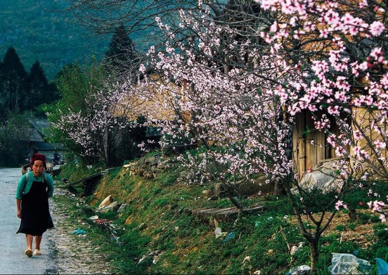 Cao nguyên hoa đào hoa mận ở Hà Giang
