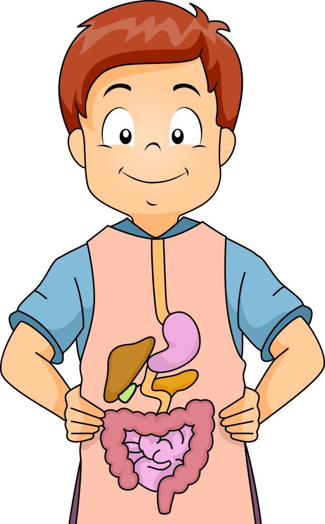Chăm sóc sức khỏe đường ruột