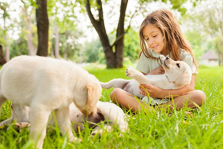 Chăm sóc thú cưng